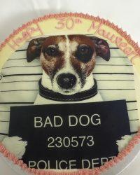 Bold Dog